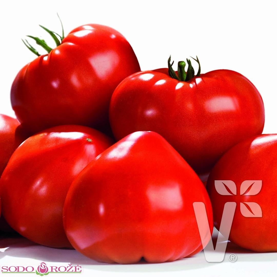 Skiepytas Pomidoras Gourmandia