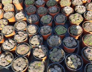 Augalai alpinariumams