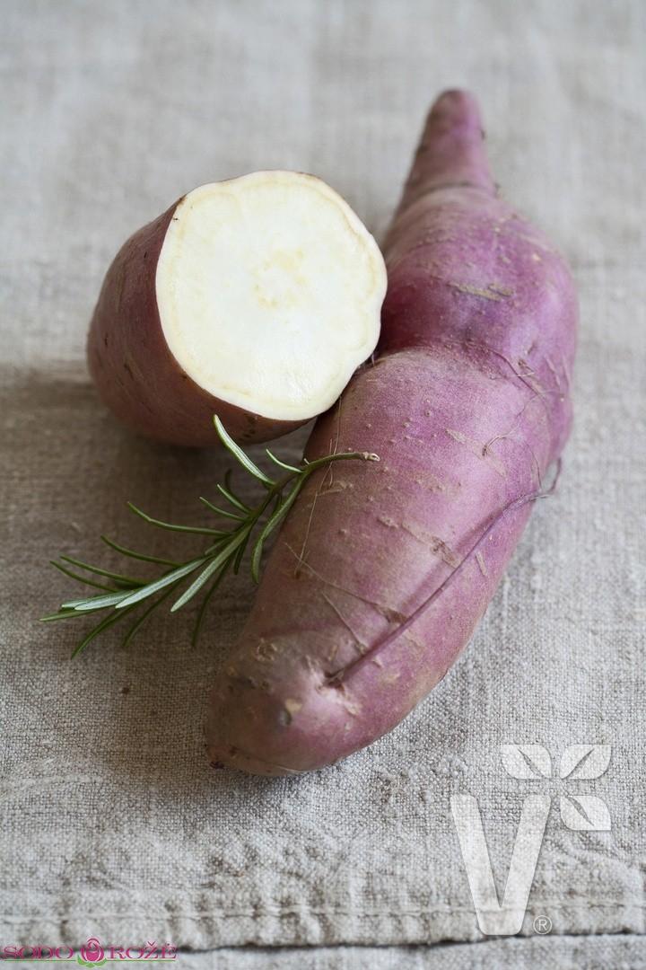 """Saldžioji bulvė (batatas) """"Erato White"""