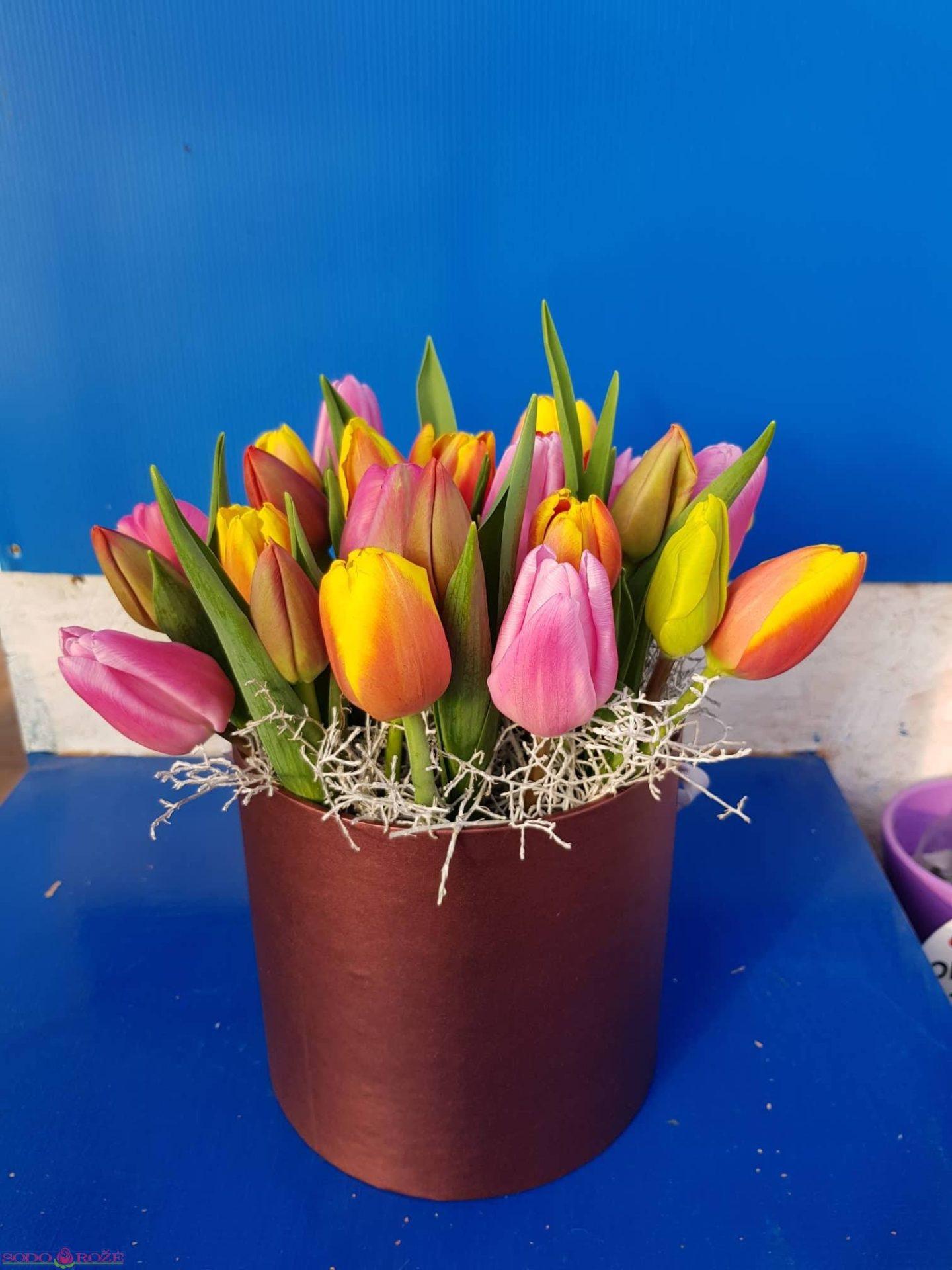 Tulpių dėžutė (35vnt.)