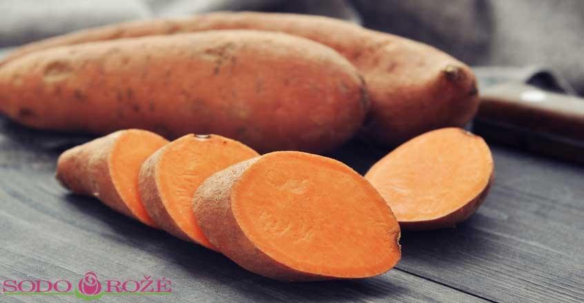 "Saldžioji bulvė (batatas) ""Erato Deep Orange"